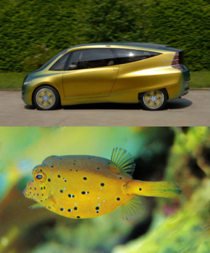 ocean-biomimicry-box-fish-car