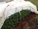 5-Kale-Thumbnail-IMG_0538.jpg