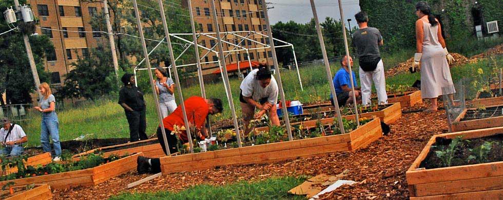 community-gardening2.jpg