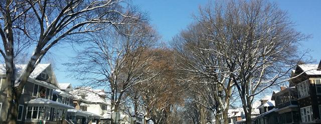 oakparktrees2