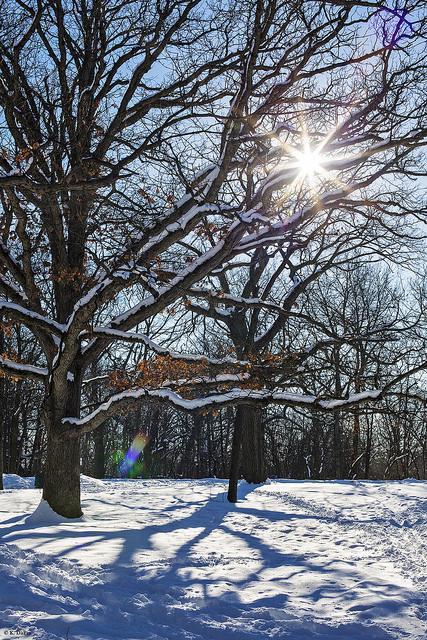 treessun