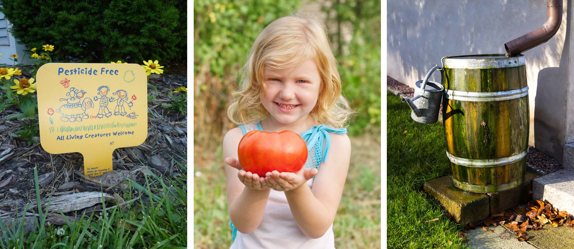 Pesticide free grass sign, a little girls holds a tomato, and a rainbarrel. All sustainable.