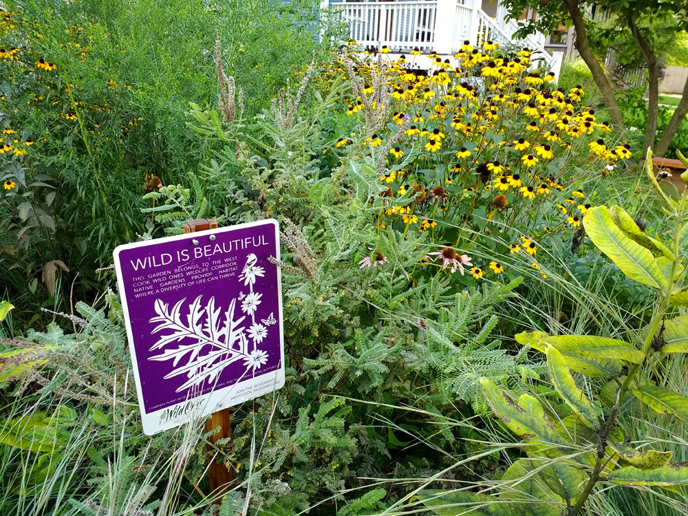 A prairie garden greets visitors in the family's front yard.