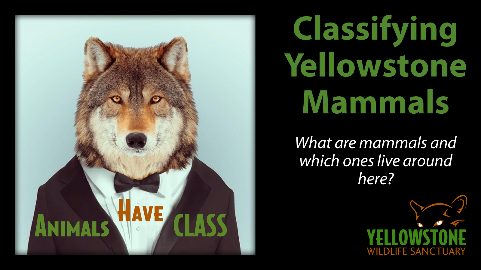 In this class, students will learn the basics of taxonomy, understand the difference between the five major classifications of vertebrates, and explore the mammals that share our ecosystem with us.