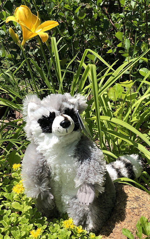 If you come in to our gift shop and do the adoption in person, we'll throw in a free plush animal of your chosen wild resident!