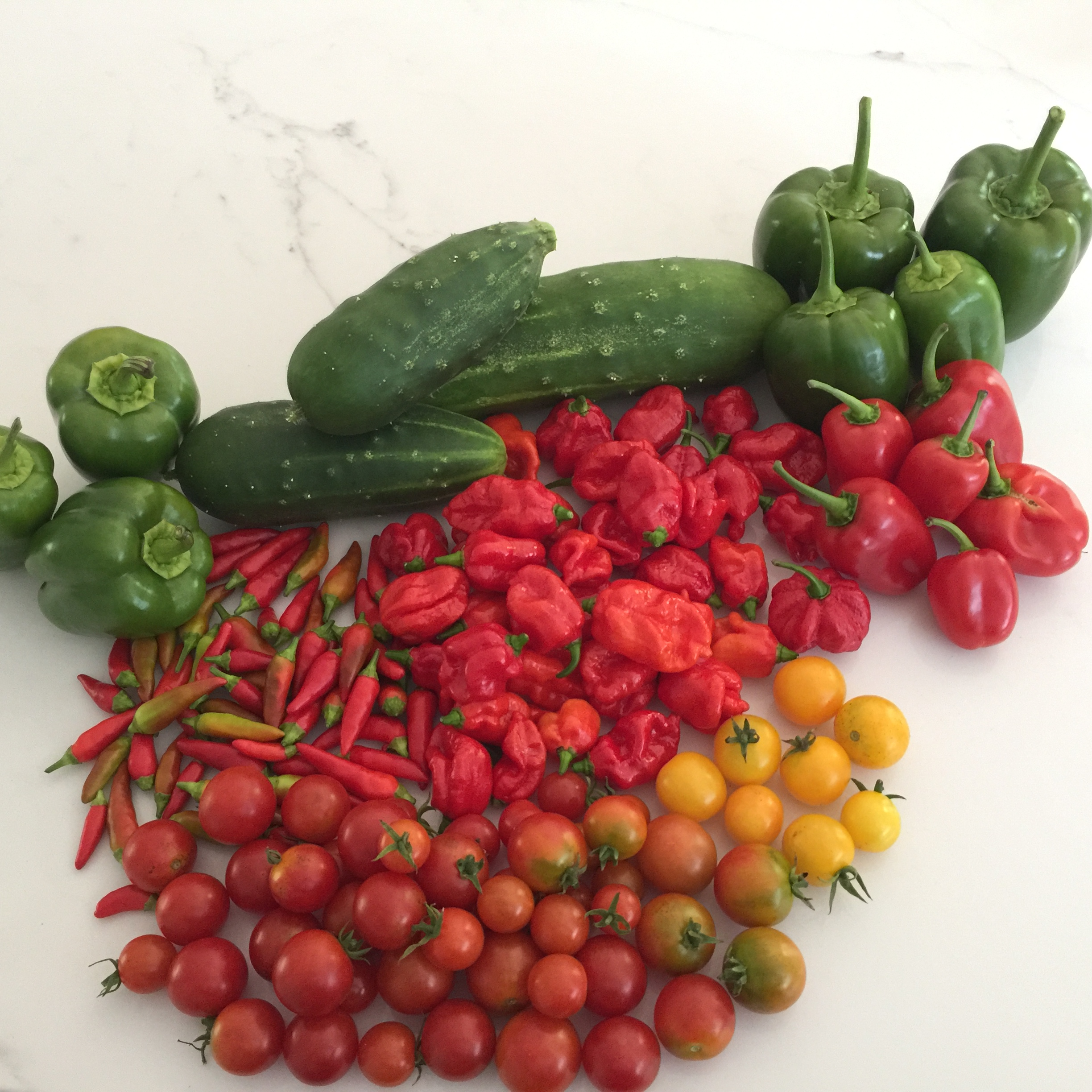 Fresh from our veggie patch