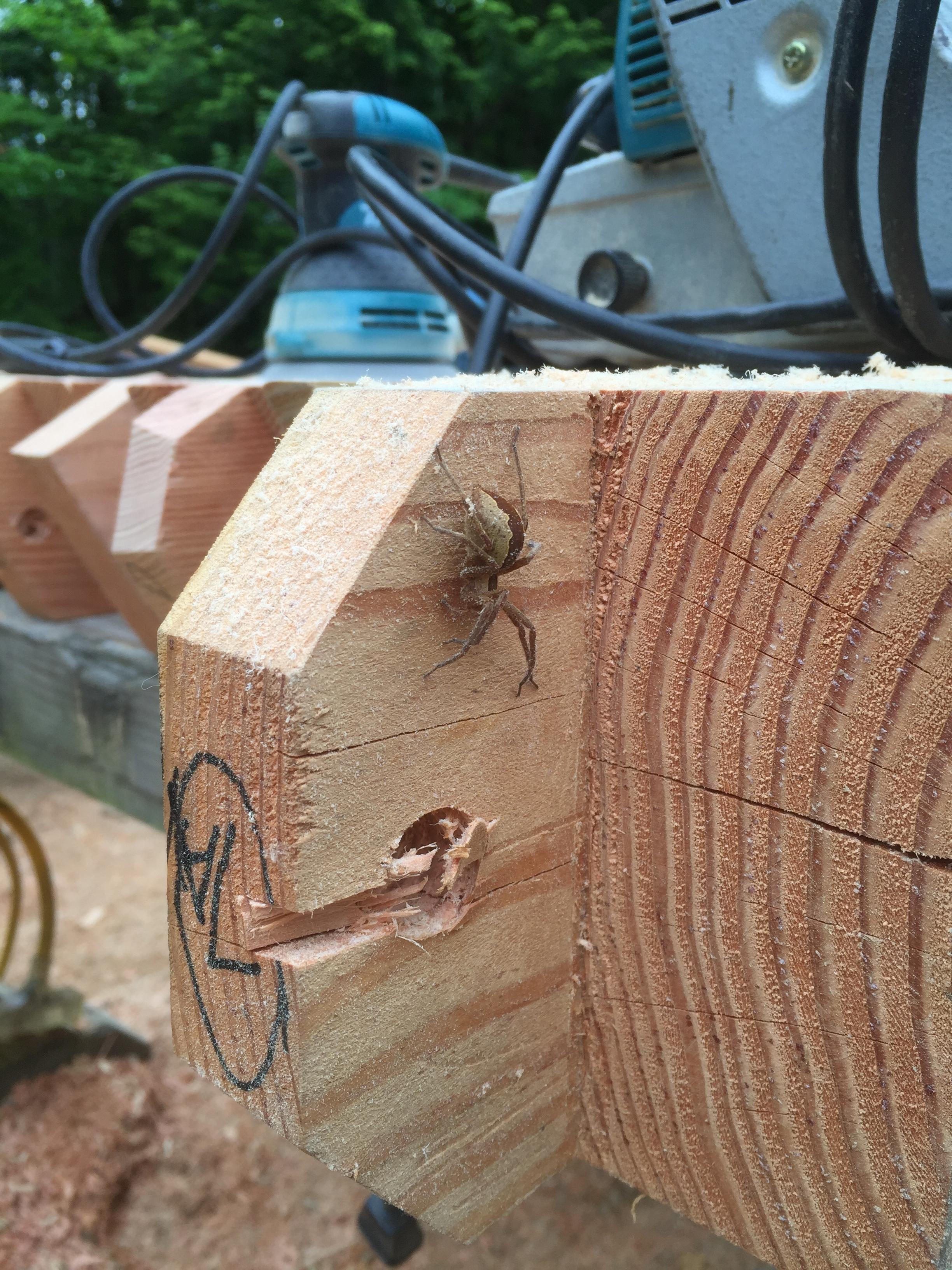 Timber Frame Spider