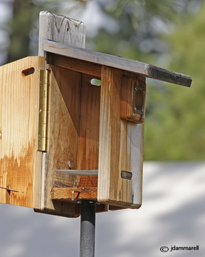 3-22-10_birdhouse_7847house.jpg