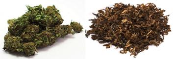 tobacco marijuana.png