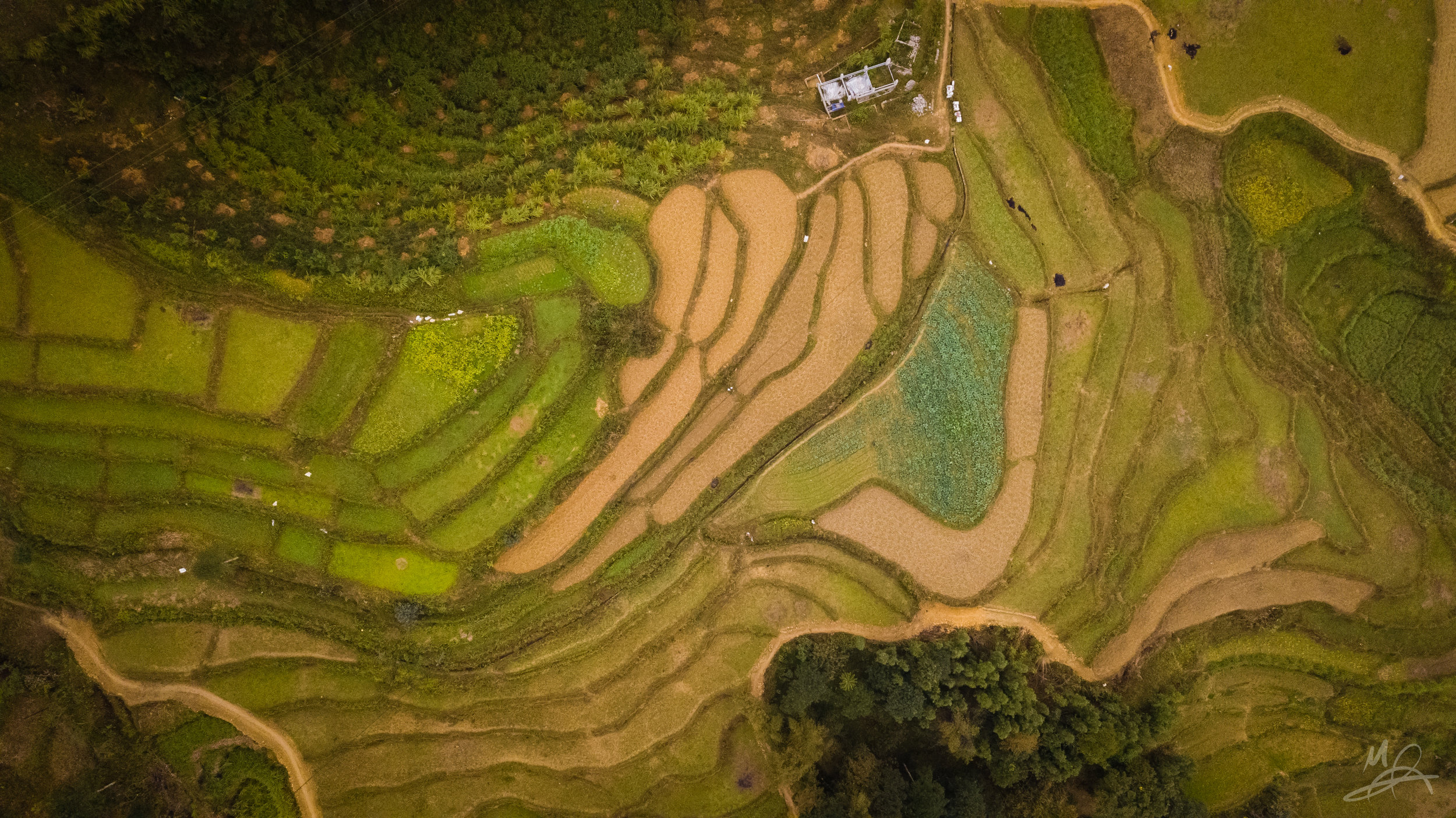 Rice paddies of Ha Giang