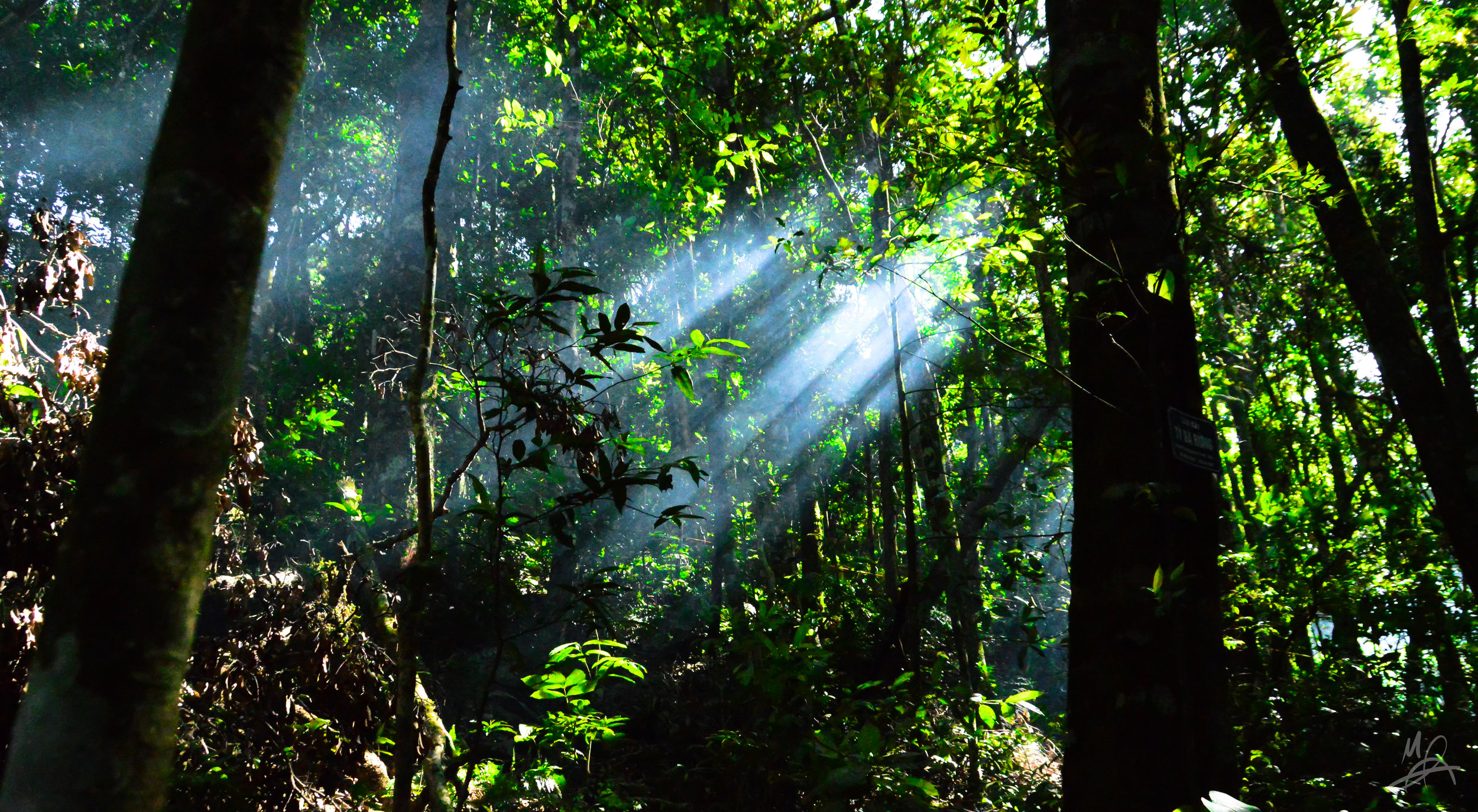 Rays spear the forest