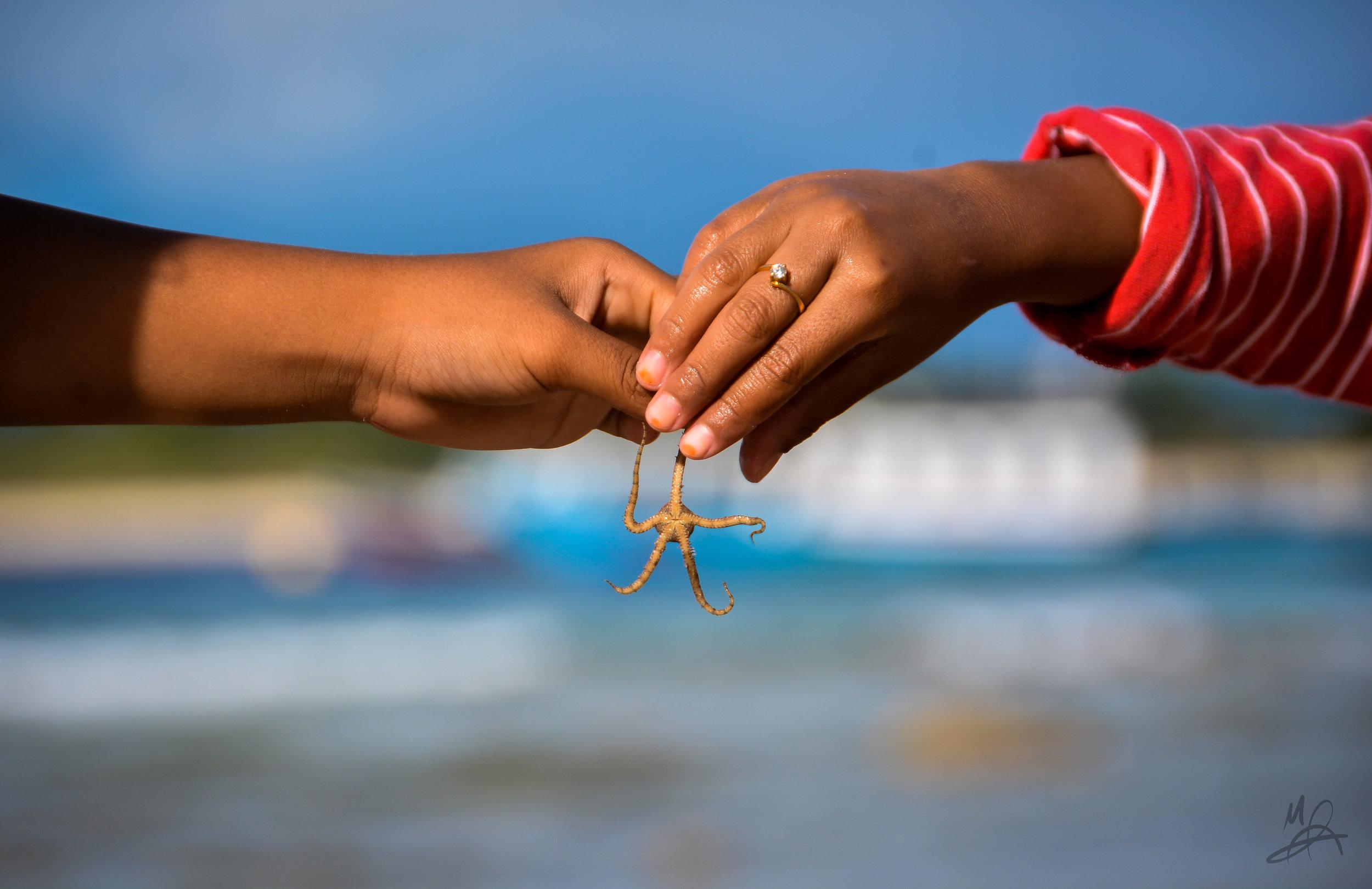 Starfish exchange