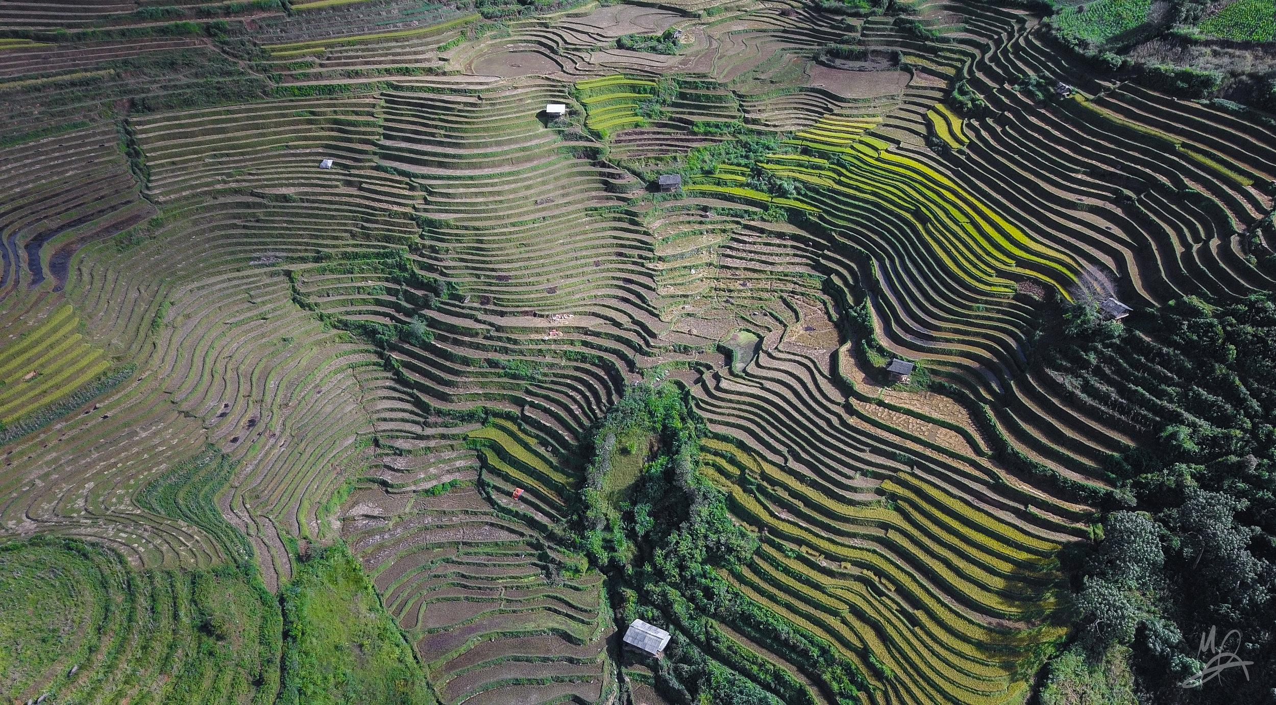 Mu Cang Chai rice paddies 1