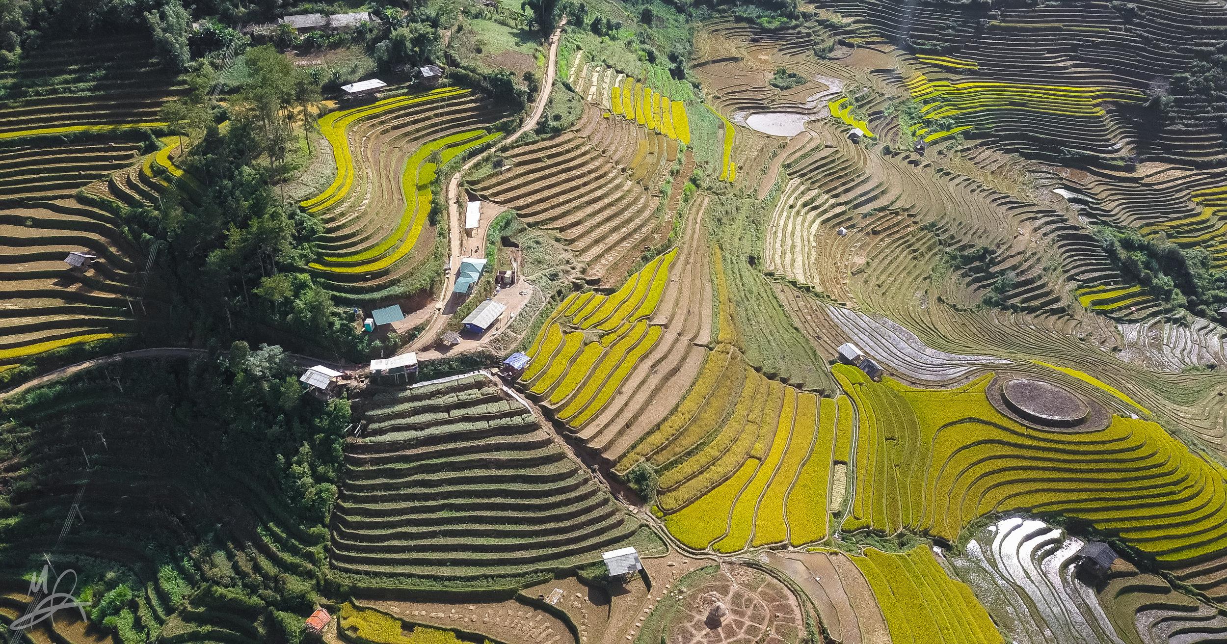 Mu Cang Chai rice paddies 2