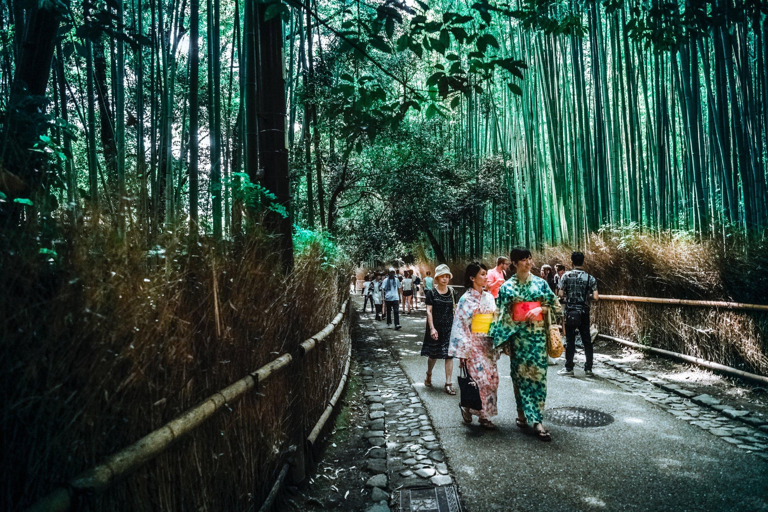 bamboo-trees-bridge-city-115603.jpg