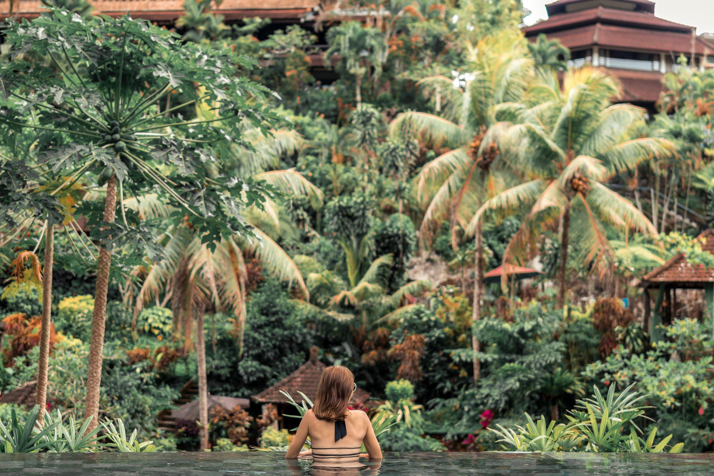 back-view-coconut-trees-daylight-1051732.jpg