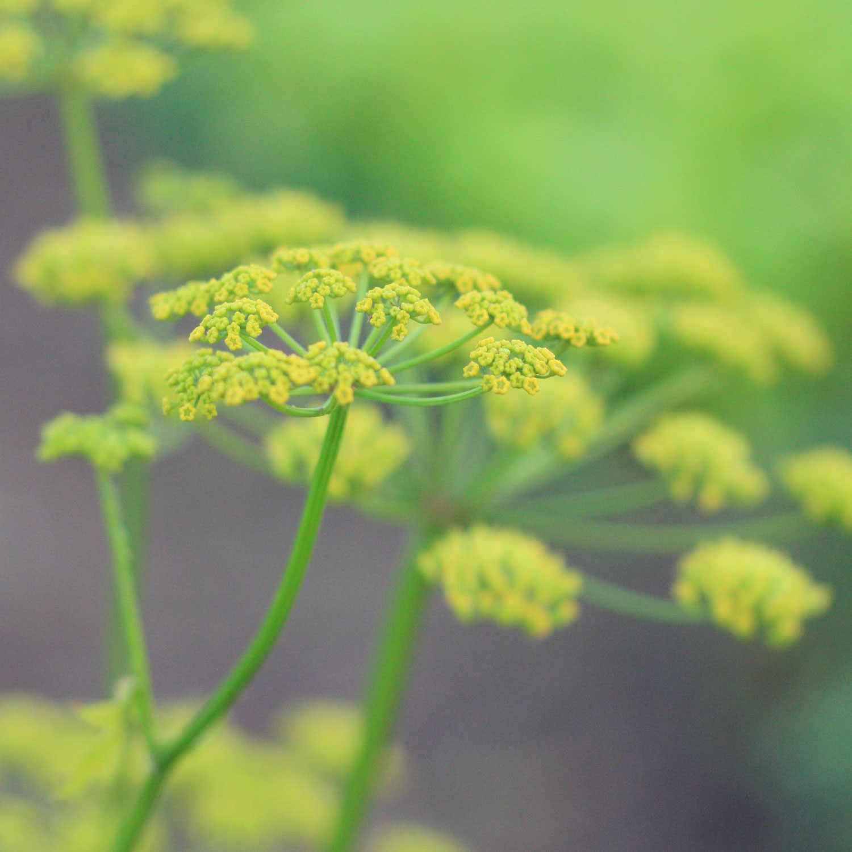 garden_liten.jpg