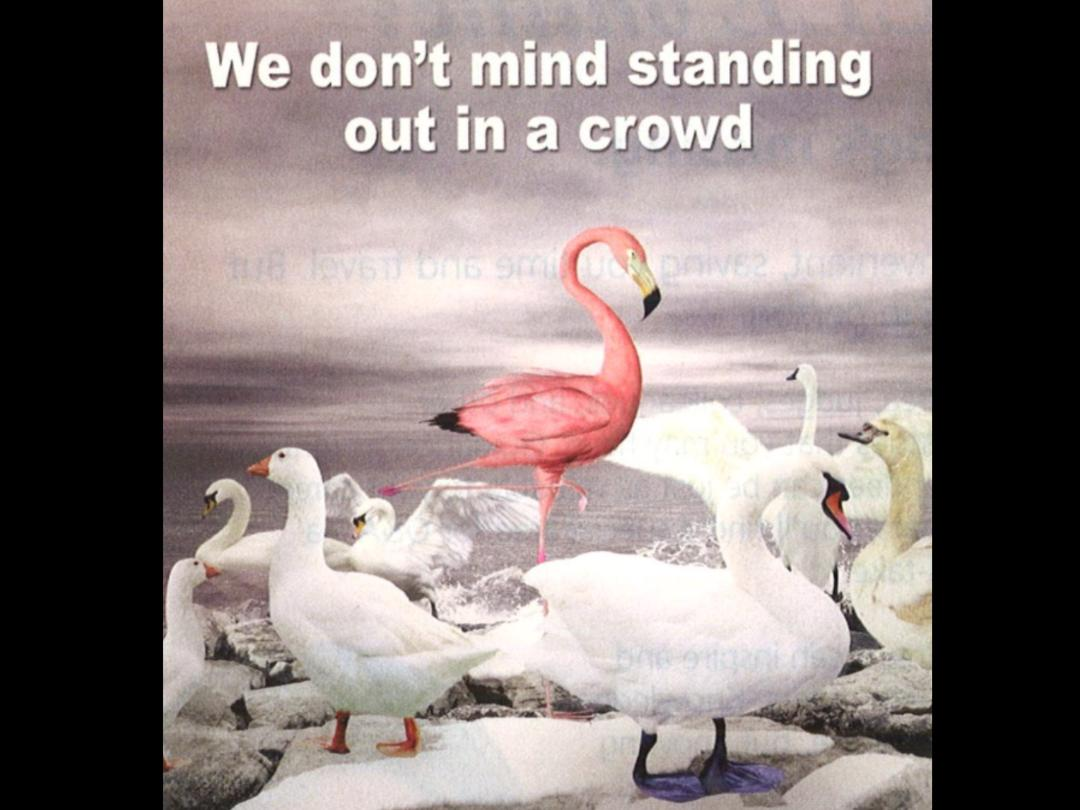 - We are the Flamingo Troop.