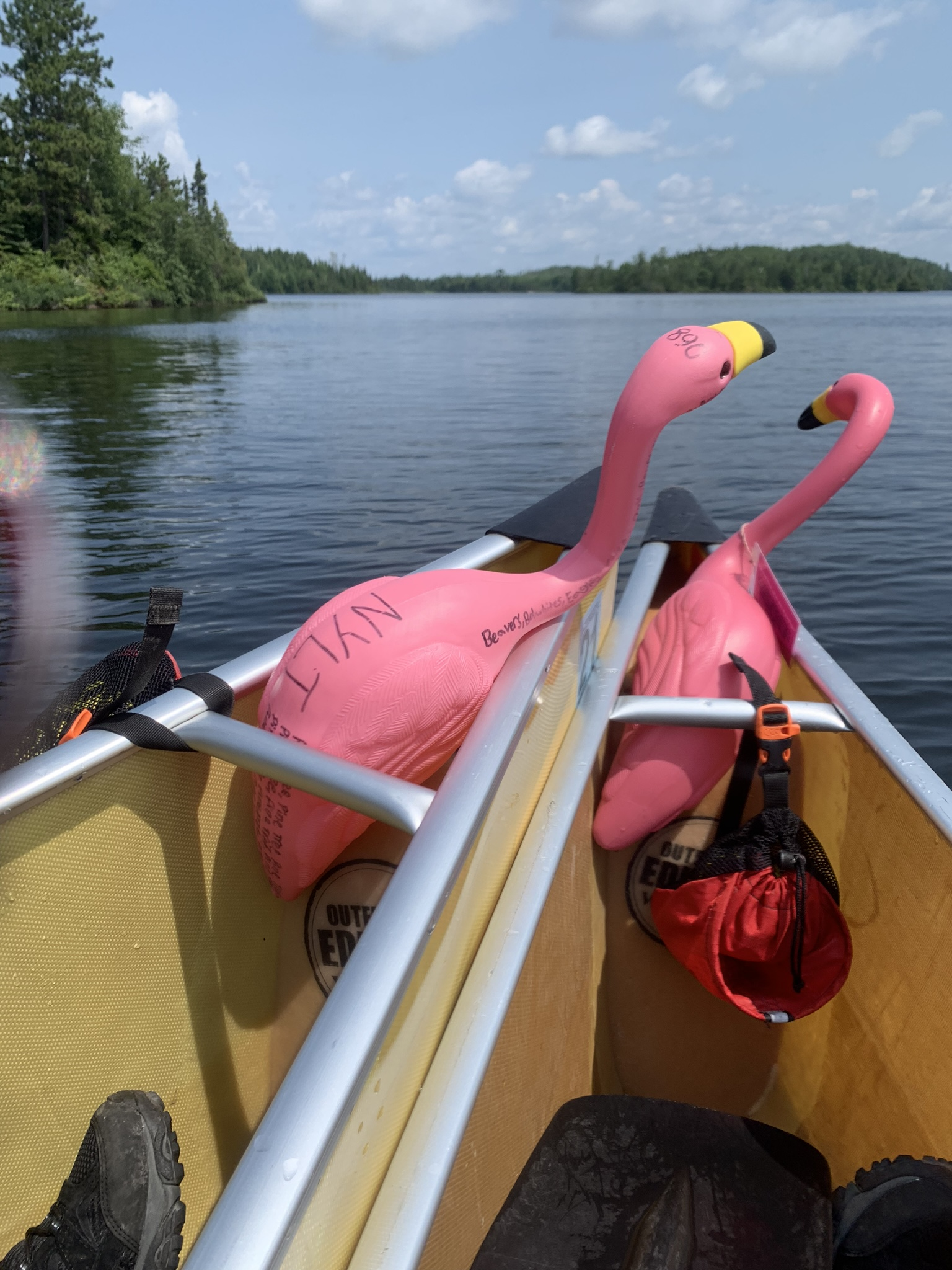 """Our official Constantin Summer Camp flamingos are named Pavel and Penelope. We have a new NYLT flamingo named Pine Tree who made the trip with us. Here, Pine Tree is trying, maybe, to attack the flamingo on right (soon to be named """"Portage"""" as the Northern Tier flamingo)"""