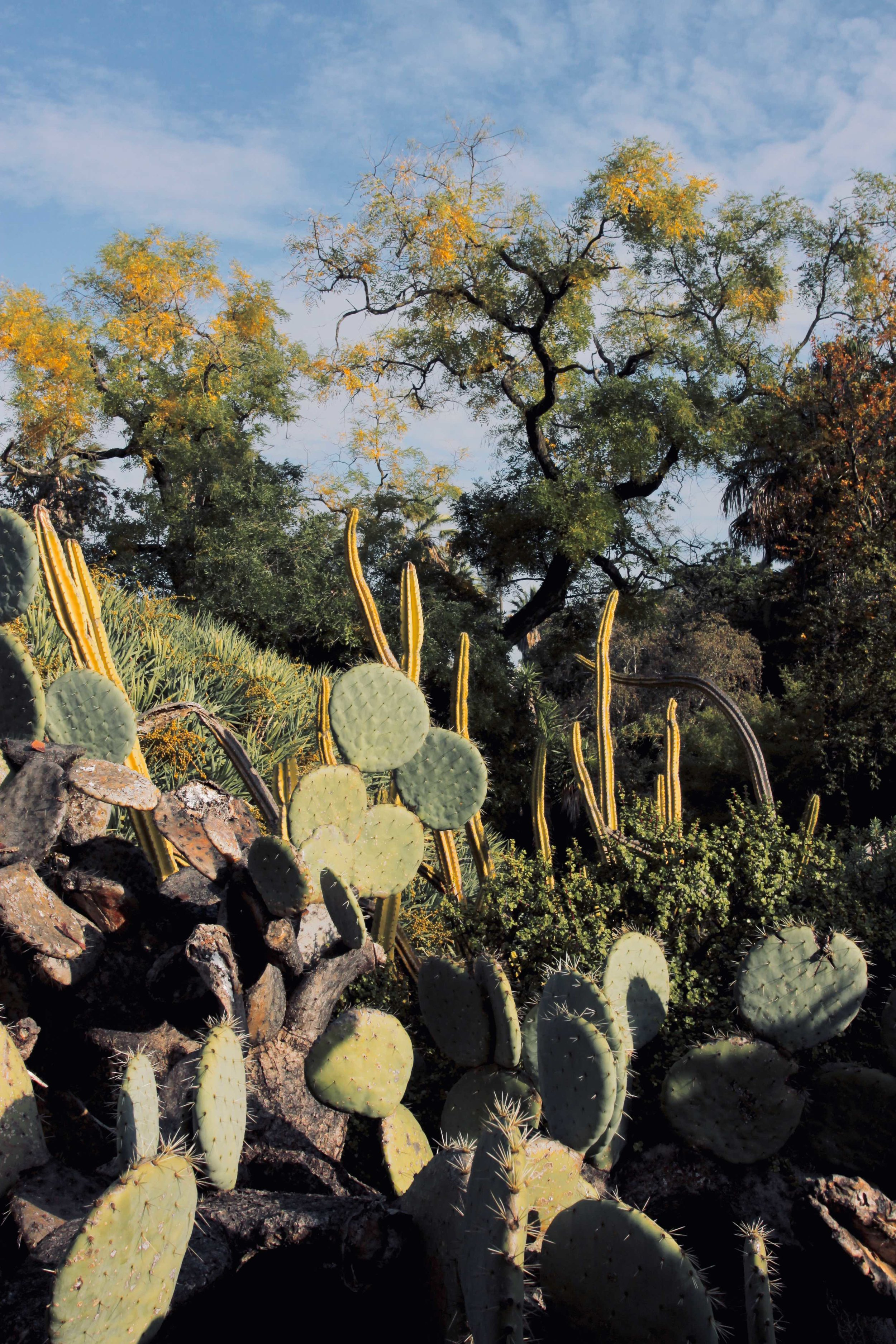 Lisbon botanic gardens cactus .jpg