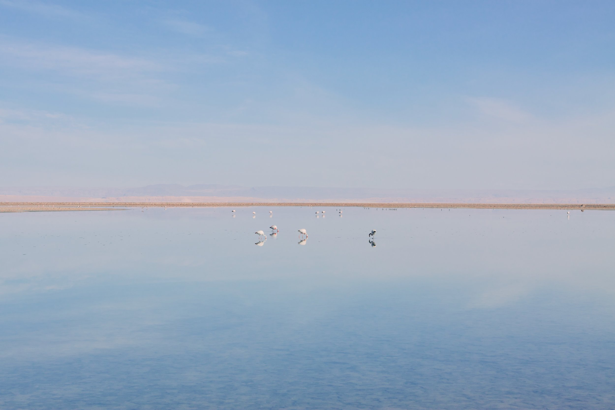 Flamingos on Laguna Chaxa, Atacama Desert Chile