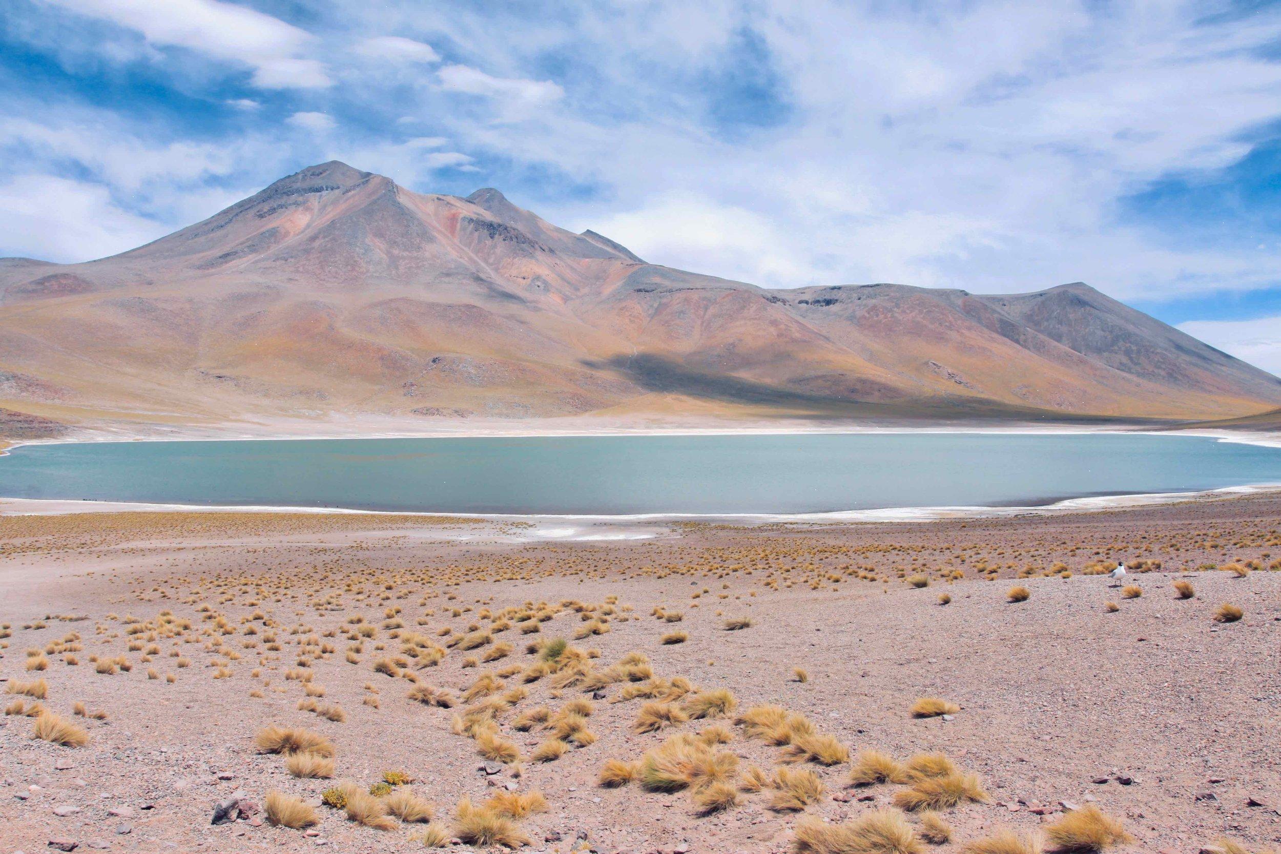 Chile Altiplanico Atacama Desert