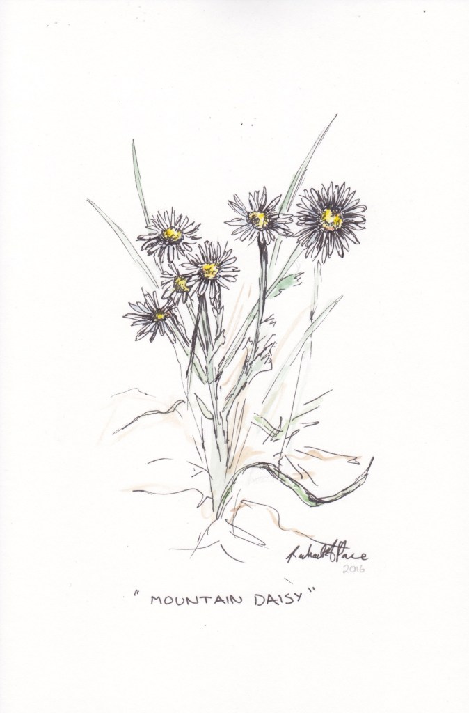 """Mountain Daisy"" by instructor Rachel Pace."