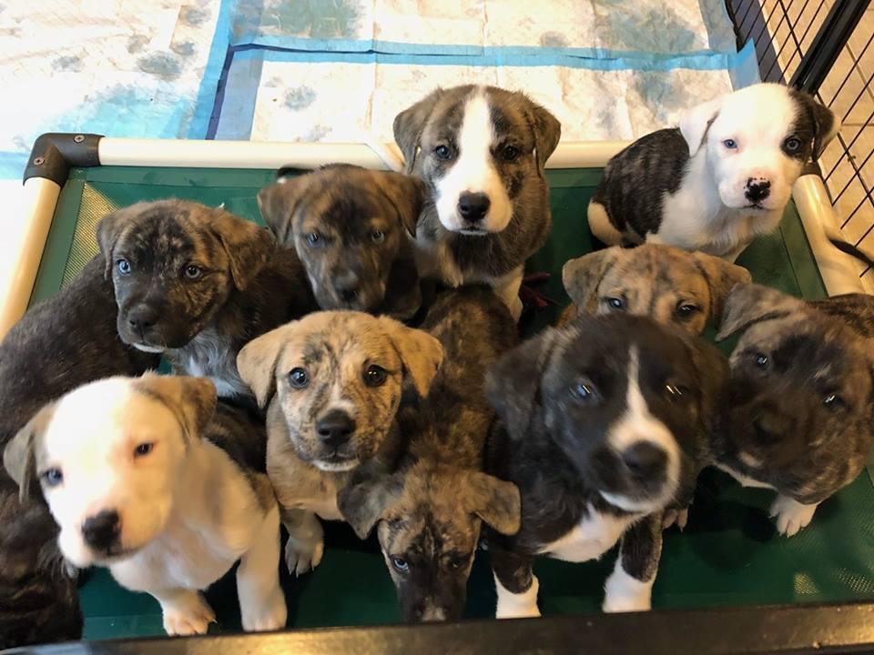 Mama Zoey Puppies Rescue