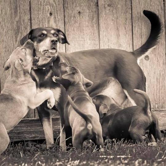 Mama Fiona + 5 Puppies
