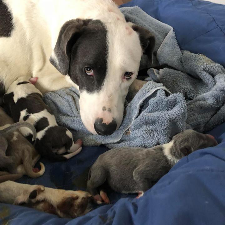 Mama Jolene + Puppies