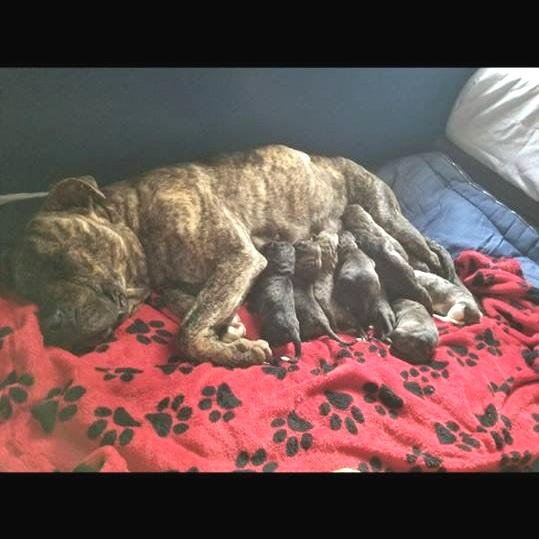 Mama Abby + Puppies