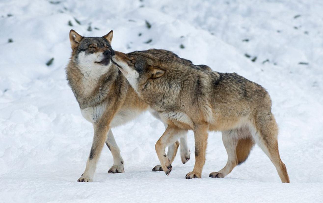 Photo thanks to  https://www.kpbs.org/news/2013/nov/05/nature-love-animal-kingdom/