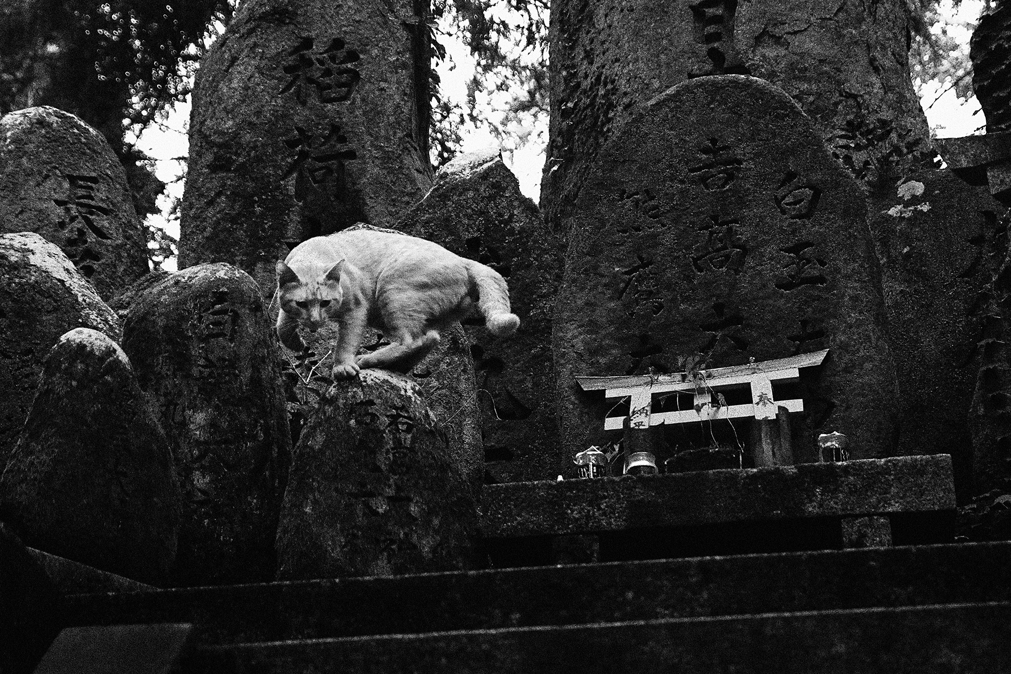 Fushimi_tiger
