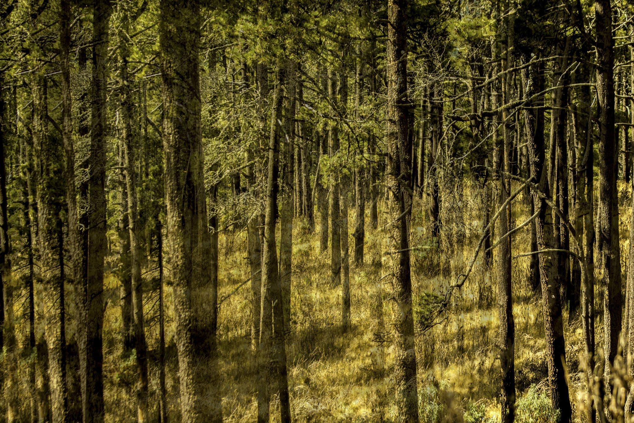 bosque-2.jpg
