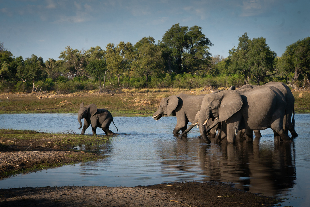 Travel Africa Elephants.jpg