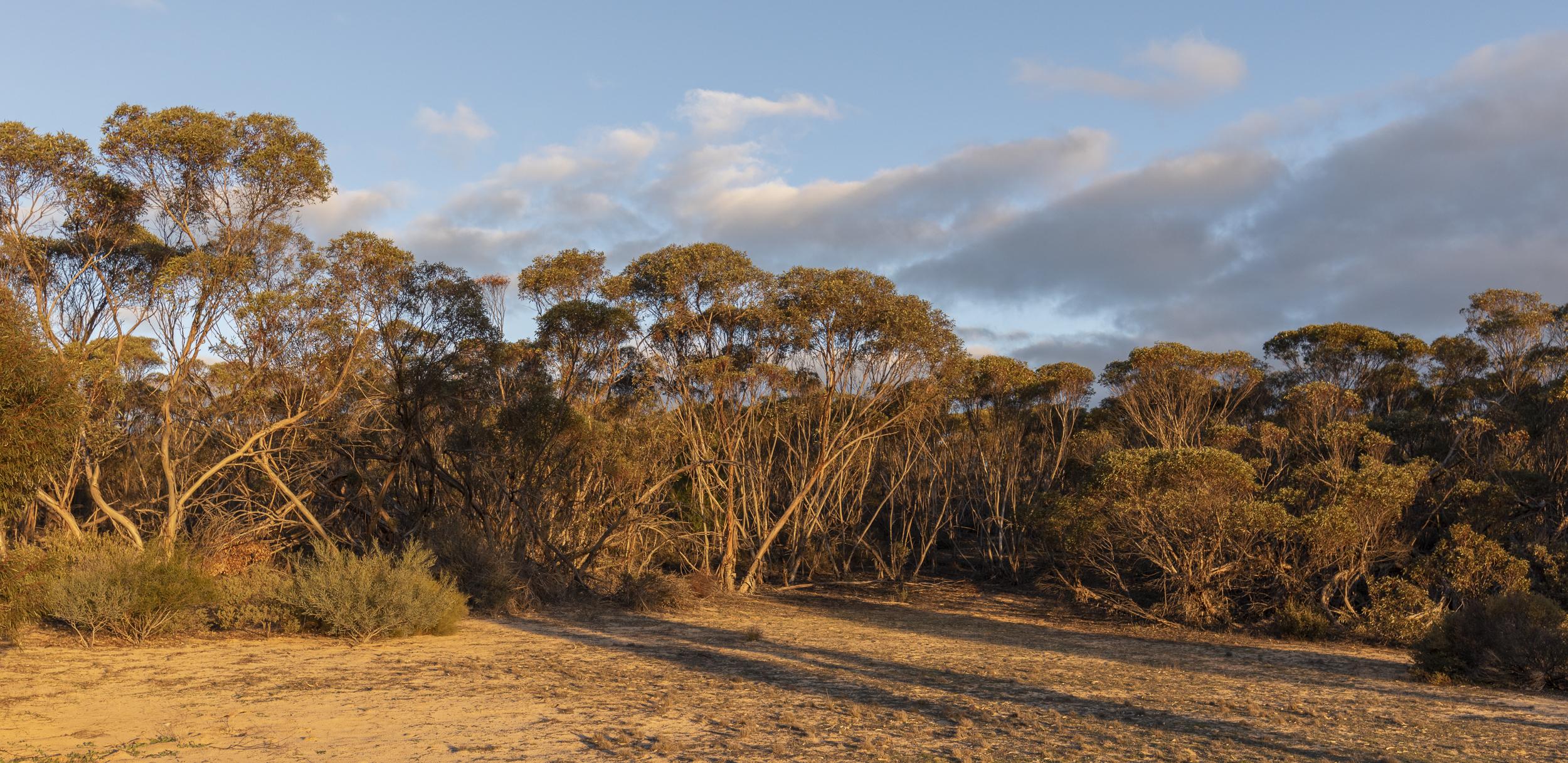 patchewollock-conservation-retreatjpg