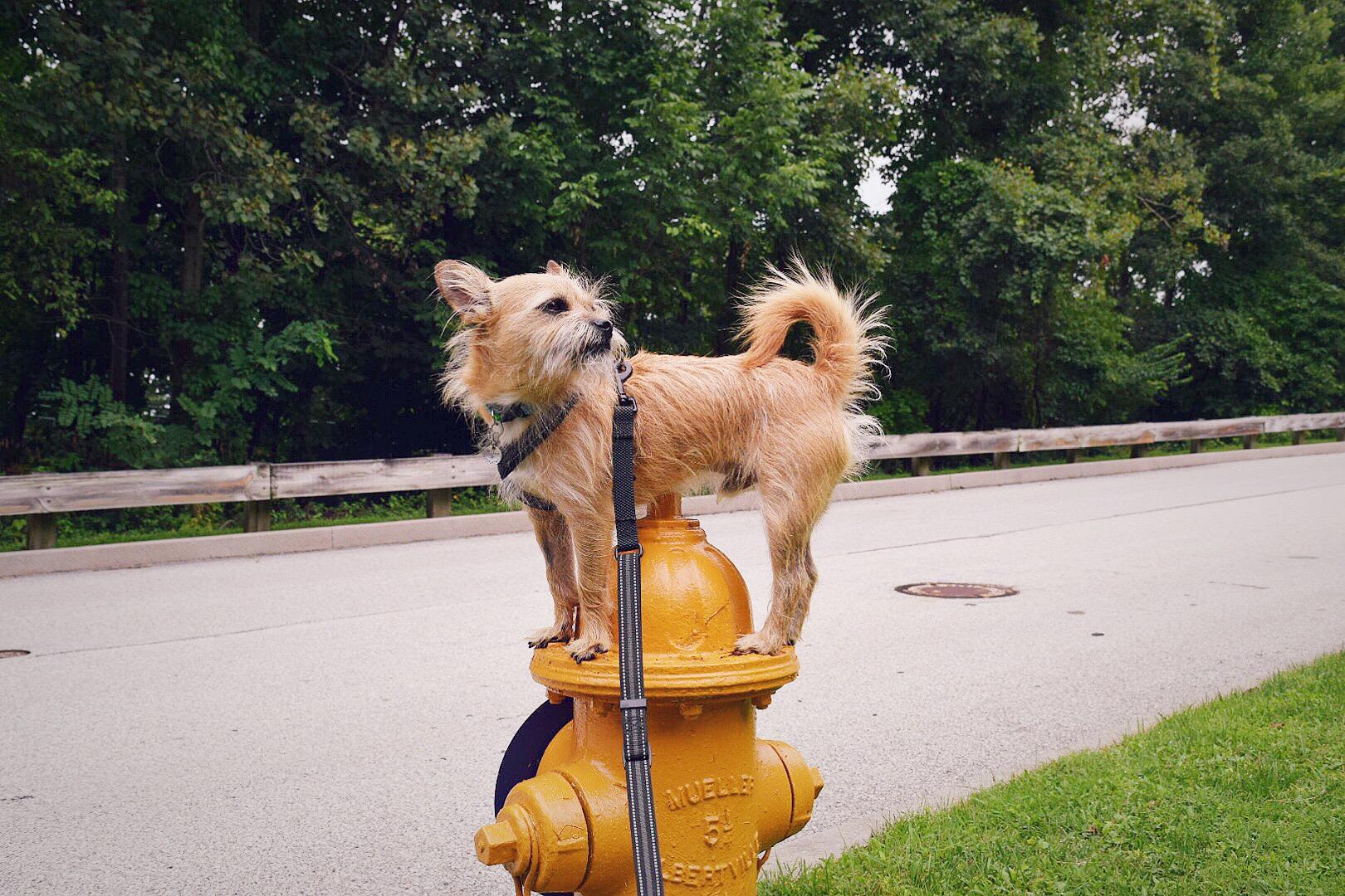 Miles on Hydrants