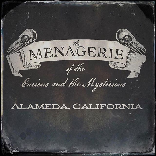 Next Saturday! Come out to @themenageriealameda for a boutique of oddities, curiosities, food and drink in Alameda's beautiful and historic Elk's Lodge building, featuring 40+ vendors of the strange and unusual. 11-7, just 5 bucks. #lionandlambstudios #themenageriealameda #oddities #curiosities #taxidermy #vultureculture #creepshow #macabre #strangeandunusual #wetspecimen #deadstuff #butstillmadewithlove
