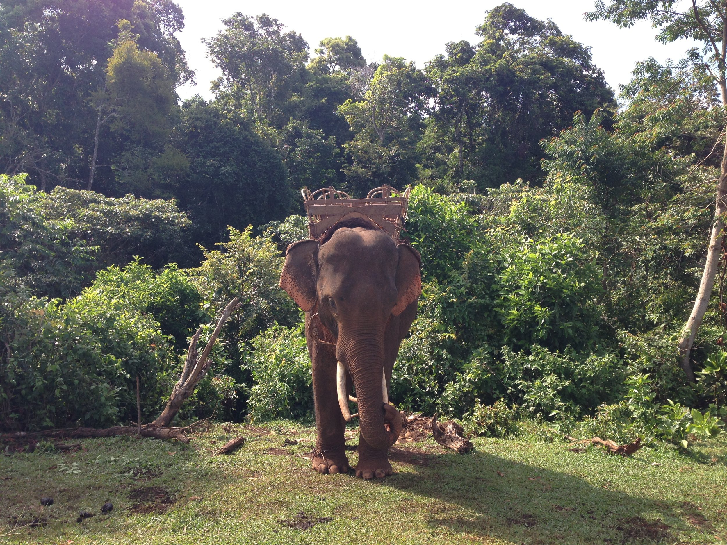 LDHE - elephant 3 - photoArnaudBouquet.jpg