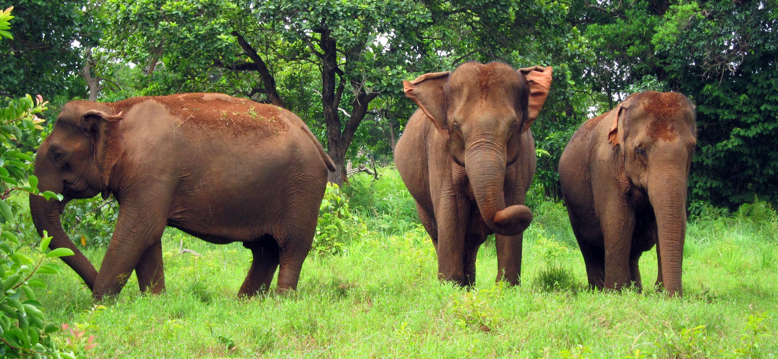 LDHE - elephants 2 - photoIanOliveri.jpg