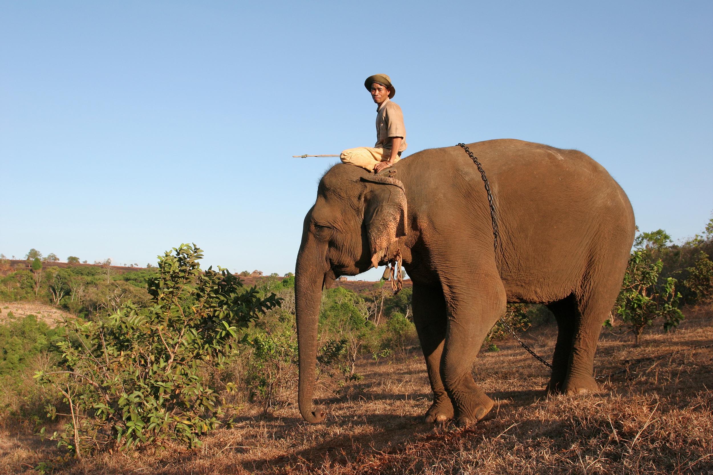 LDHE - mahoutelephant - photoAroonThaewchatturat.jpg