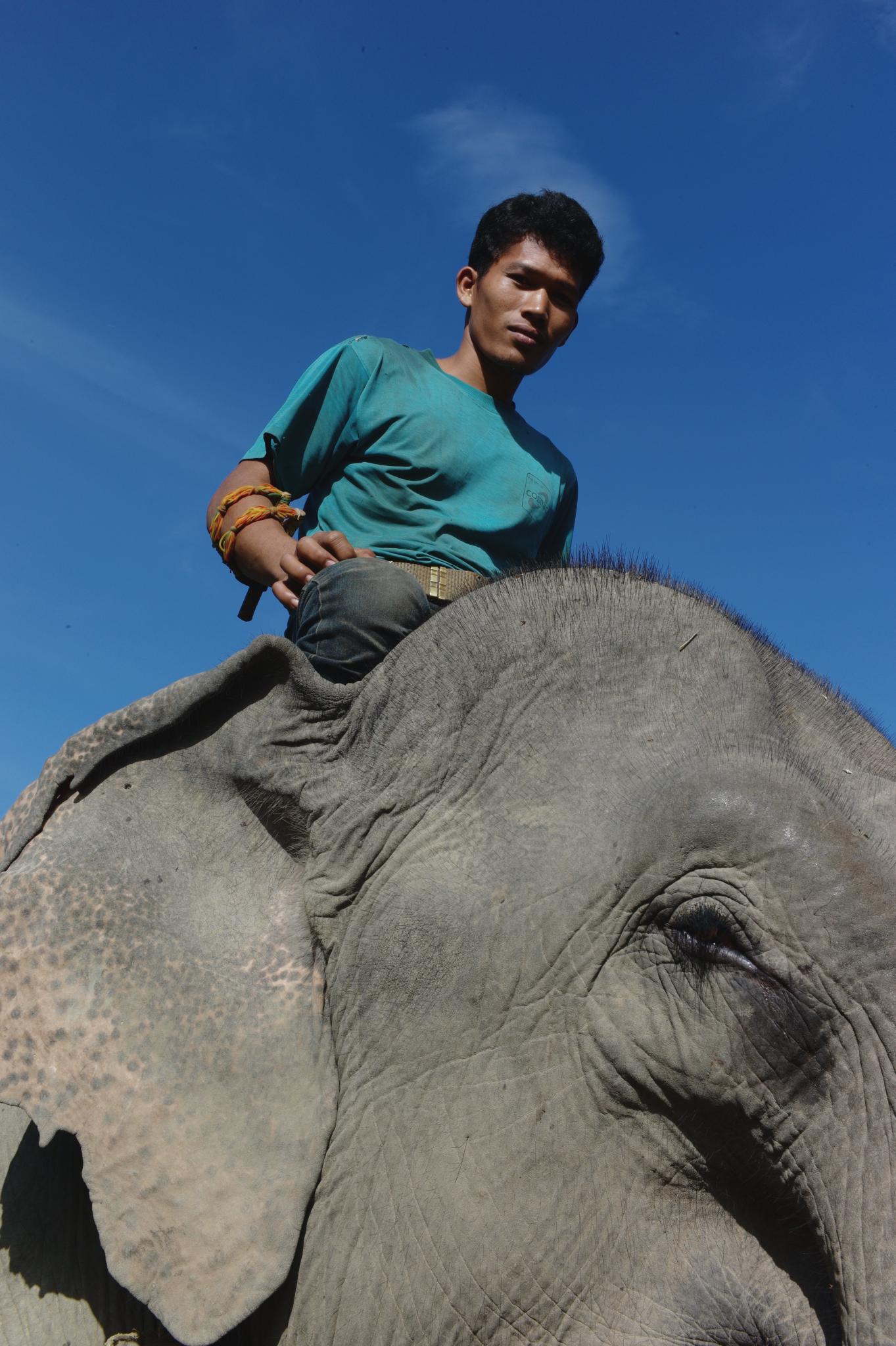 LDHE - Kem_elephant - photoArnaudBouquet.png