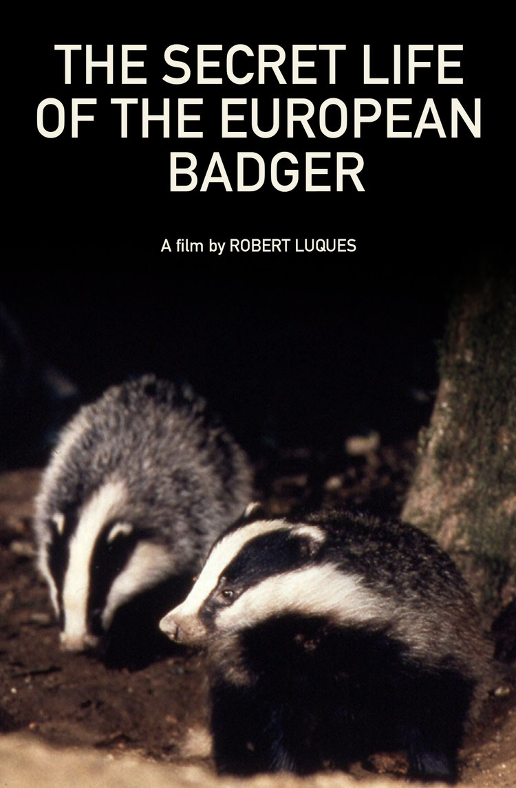 The Secret Life of the European Badger