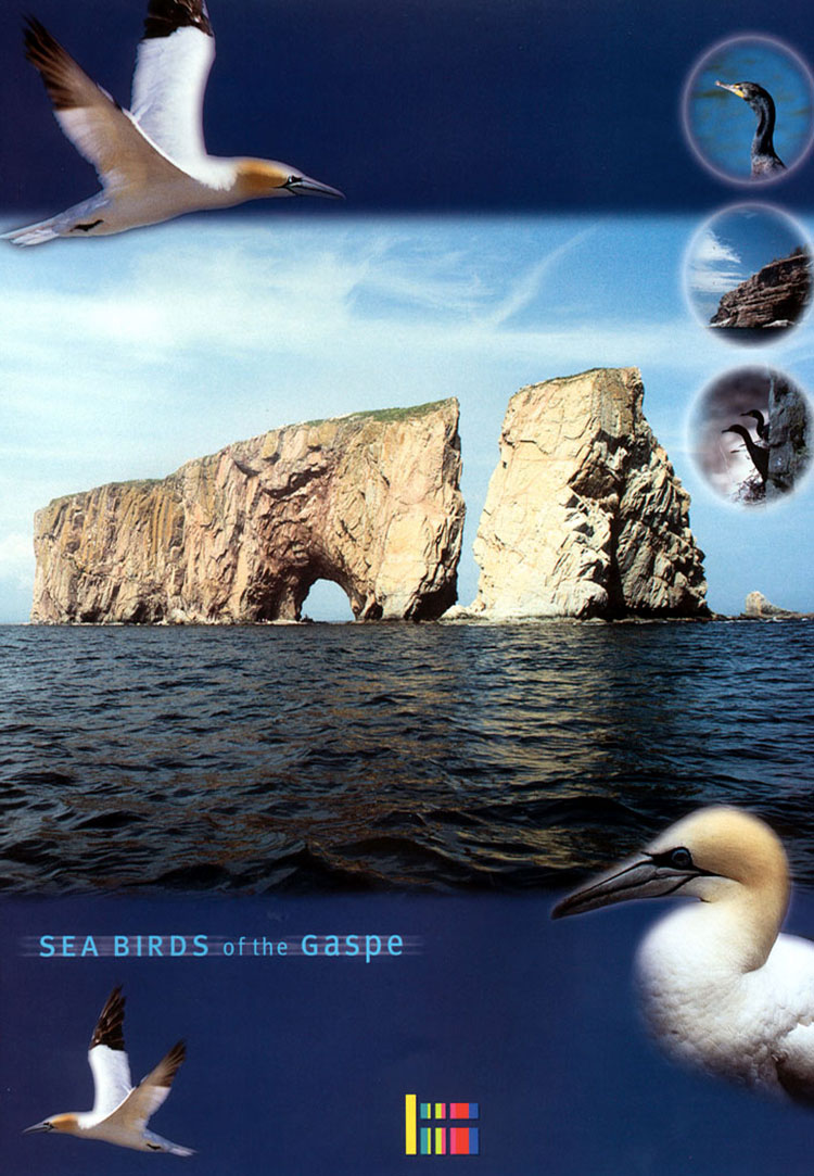 Sea Birds of the Gaspé