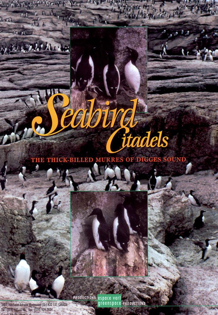 Seabird Citadels