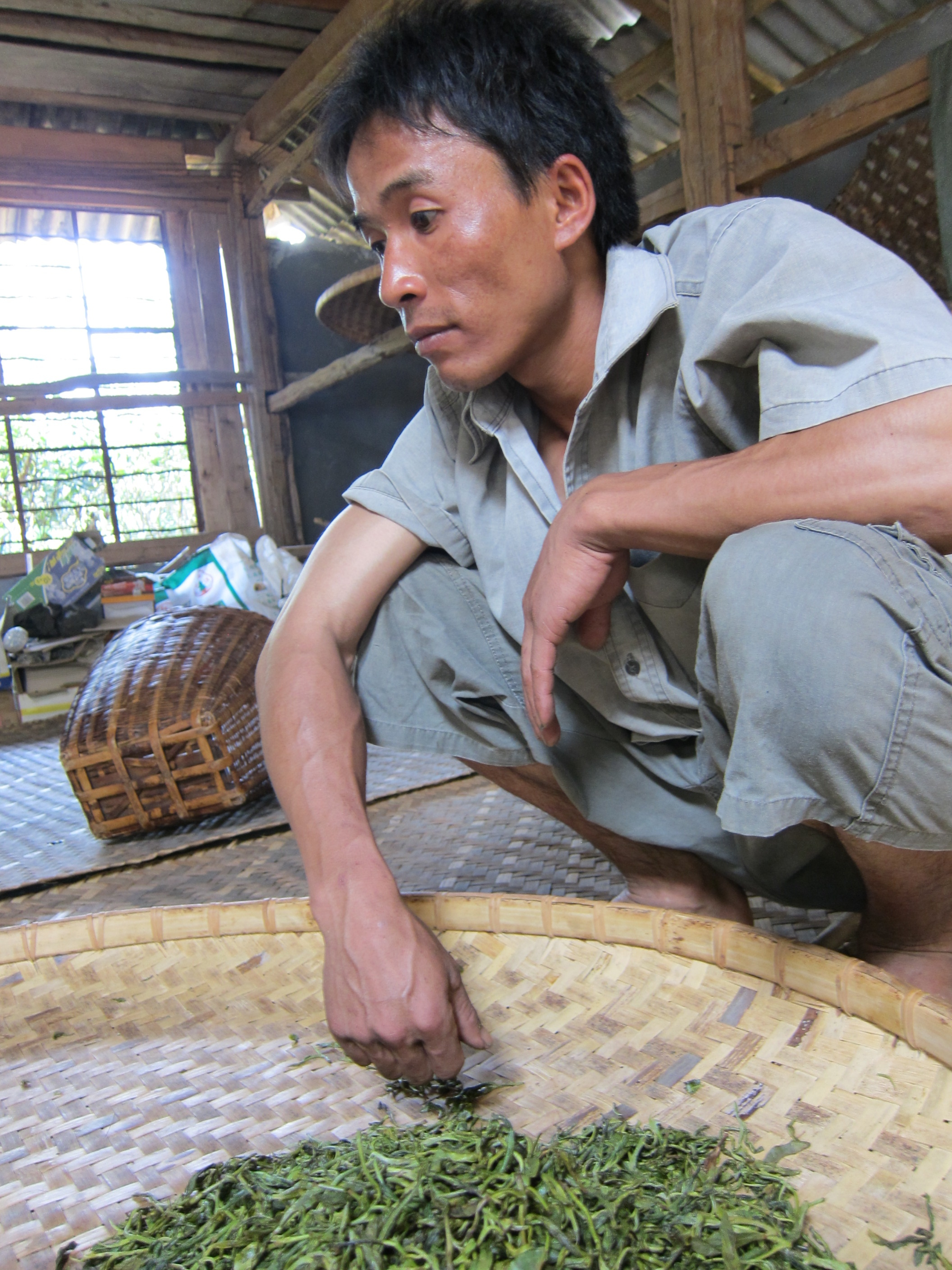 Tea Explorer - Tea Worker drying leaves.jpg