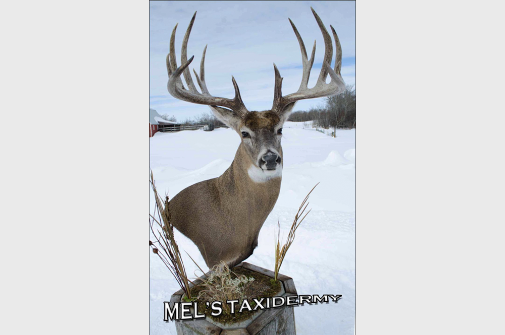 Mel's Taxidermy