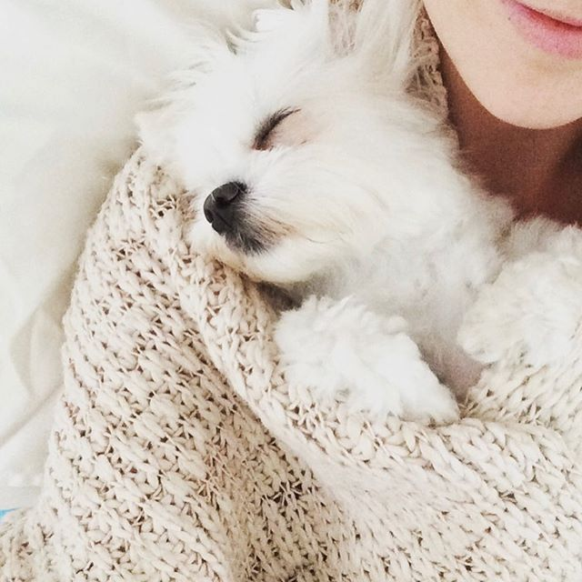 Morning snuggles.  My all time favourite friend to nap with. This little snuggle muffin is super cute when she has sleepovers with Aunty Em.  I took this a few years ago on a cold winter morning when she was sleeping.  Moments like this are always worth sharing. The ones that still make you smile years later.  #dogsofinstagram #puppies #puppycuddles #morningsnuggles #momentslikethis #spoonie #spoonielife #endometriosis #adenomyosis #butyoudontlooksick #chronicpain #chronicpelvicpain #chronicillness #furbabies #snugglepuppy
