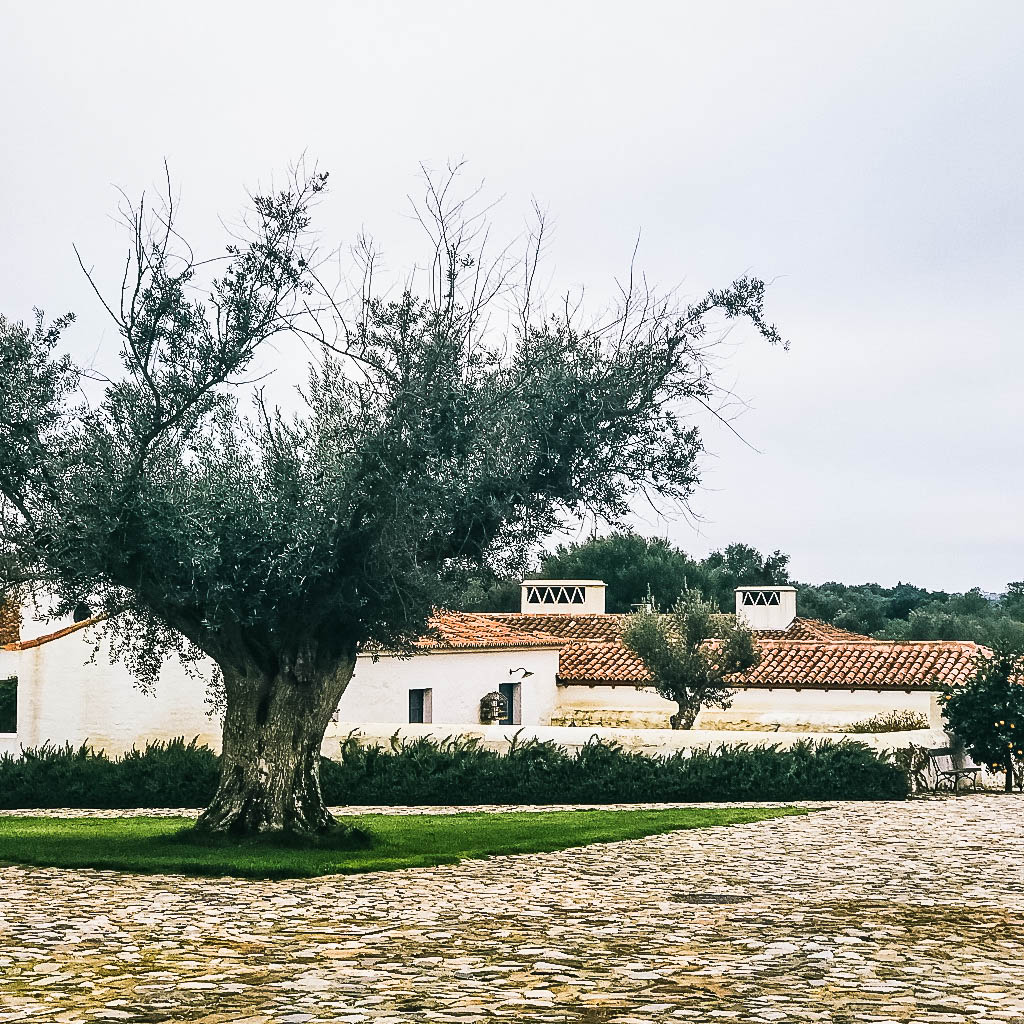 sao lourenco do barrocal - 7200-177 Monsaraz, PortugalTel: +351 26 247 140www.barrocal.pt