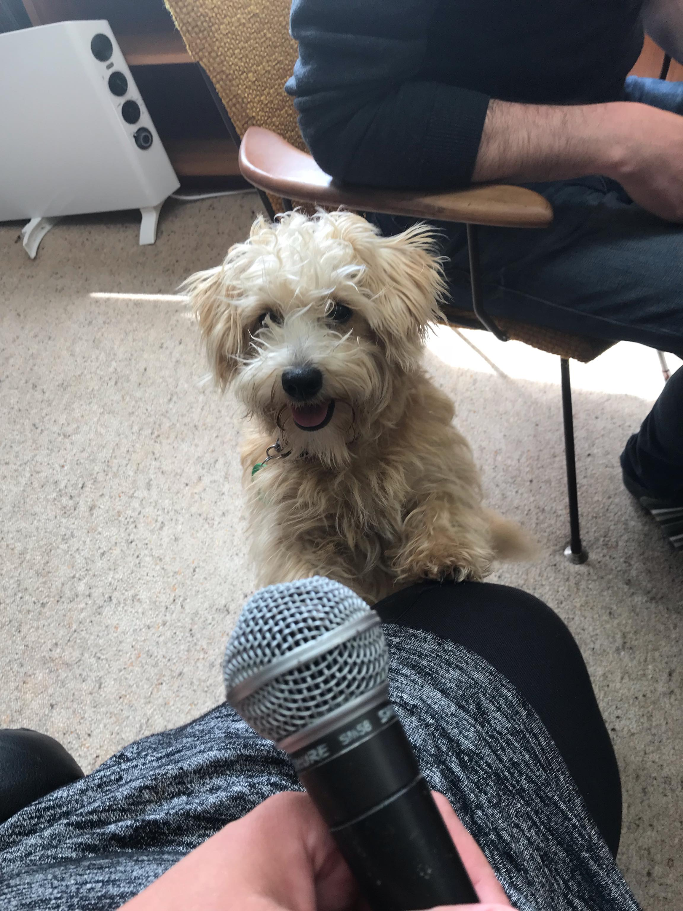 Currently the only sponsor we have is my puppy but she pays in kisses and not money. - If you would like to explore with us what it would look like for you to become our podcast sponsor then click the contact button and get in touch.